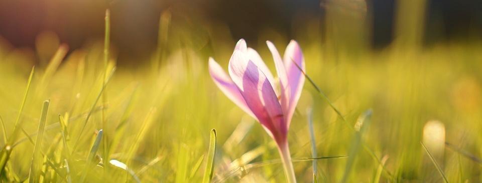 7 mooie herfstbloeiers voor je tuin