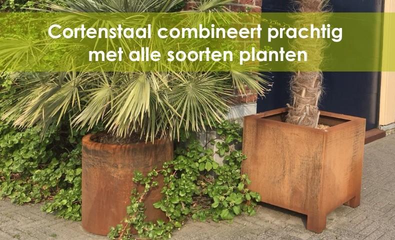 vierkante cortenstaal plantenbakken