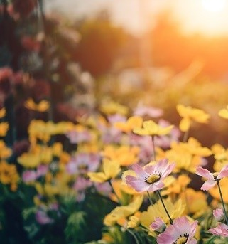 vaste planten die het goed doen in de schaduw
